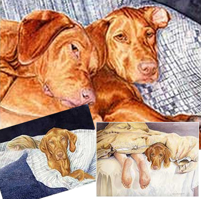 Vizsla Fridge Magnet 3pc Set